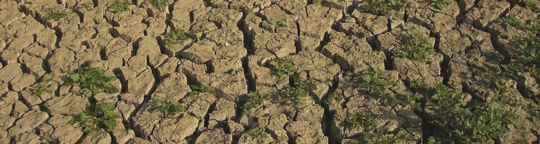 Drought. Photo - CEH Corporate, CEH